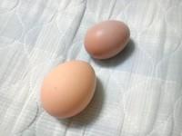 初産の卵1