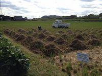 稲藁の除去