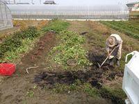 爺さまのサツマイモ掘り
