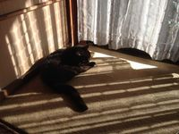 老猫の日向ぼっこ