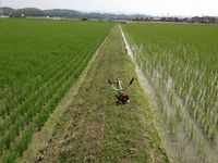 普通斜面の草刈り